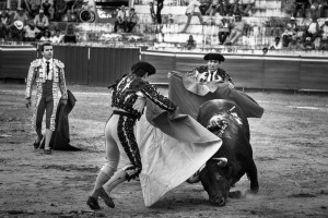 SUERTE SUPREMA — Banderilleros help the matador distract the bull, after the bull receives its final blow.