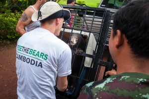 Nev Broadis, the regional director of Free The Bears, tries to calm the bear cub before the nine-hour drive from Samlaut district in western Cambodia to the rescue centre at Phnom Tamao, some 400kms away.