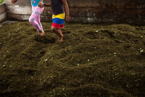 "Young girls play over the coca leaves kicking them to mix it with cement and ammonia in the first step of processing coca paste at a makeshift laboratory in north-west Colombia. ""She doesn't work here, but the kids like to come and hang out. They keep us company"", explains her father."