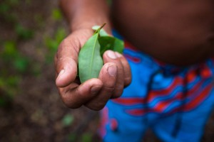 "Pedro – not his real name, 41, harvests coca leaves from his 14 year-old son's plantation in Tierralta, Córdoba. ""We have a thousand [coca] plants here. We get about $400,000 pesos (US$135) every two months, but we're gonna have to take them out if the peace process goes through and the police arrives"", the cocalero says."